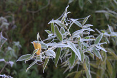 frost Lizenzfreies Stockfoto
