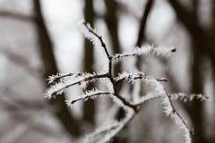 frost Arkivfoton