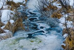 frost Royaltyfri Fotografi