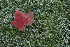 Frost. Forst on leaves and grass - Edward's Garden Stock Image