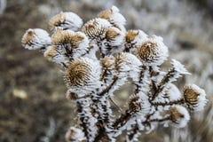 frost Stockfotografie