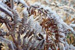 Frost auf Adlerfarn-Wedeln Lizenzfreie Stockfotos
