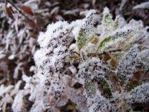 Frost auf Anlagen Stockbild