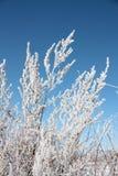 Frost auf Anlagen Stockbilder