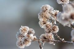 Frost auf Anlagen Stockfotos