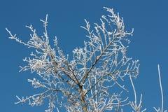 Frost auf Anlagen Stockfoto