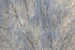 Frost auf Baumüberdachung, für Weihnachtshintergrund Lizenzfreies Stockbild