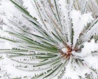 Frost auf Baum Stockfoto