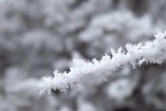 Frost auf Baum lizenzfreies stockfoto