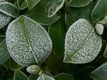 Frost auf Blättern Lizenzfreie Stockbilder