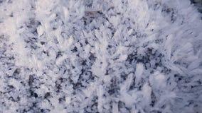 Frost auf Blättern und Gras stock video
