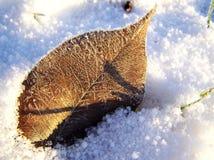 Frost auf Blatt Lizenzfreies Stockbild