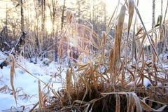 Frost auf dem Busch im Wald Lizenzfreies Stockbild