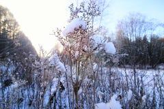 Frost auf dem Busch im Wald Lizenzfreie Stockbilder