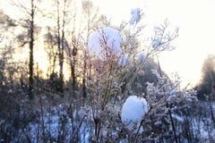 Frost auf dem Busch im Wald Stockfotos