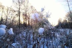Frost auf dem Busch im Wald Stockbild