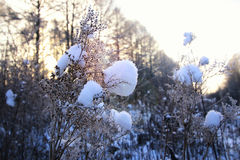 Frost auf dem Busch im Wald Lizenzfreies Stockfoto
