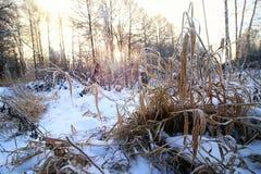 Frost auf dem Busch im Wald Lizenzfreie Stockfotos