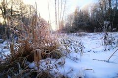 Frost auf dem Busch im Wald Lizenzfreie Stockfotografie