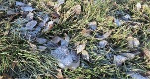 Frost auf dem Gras stock footage