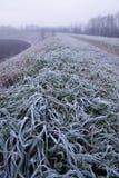Frost auf dem Gras Stockfoto