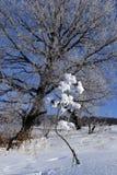 Frost auf dem Gras Stockfotos