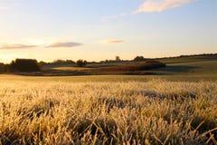 Frost auf dem Gras im November Lizenzfreies Stockfoto