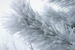 Frost auf den Bäumen Lizenzfreie Stockbilder