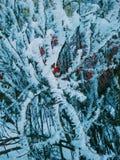 Frost auf den Büschen Lizenzfreies Stockfoto