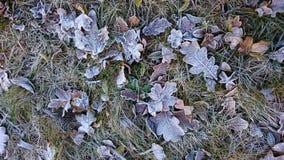 Frost auf den Blättern Lizenzfreies Stockfoto