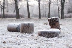 Frost auf den Stümpfen lizenzfreies stockfoto