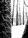 Frost auf der Barke eines Baums Stockfoto