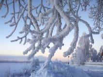 Frost auf einem Baum lizenzfreie stockfotos