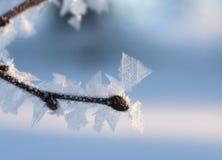 Frost auf einem Zweig Stockbilder