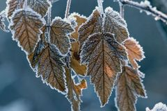 Frost auf Fallblättern Lizenzfreies Stockbild