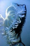 Frost auf Fensterscheibe Stockfotos