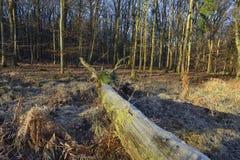 Frost auf gefallenem Baum Lizenzfreie Stockbilder
