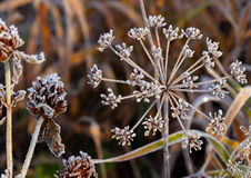 Frost auf Gras Stockfotos