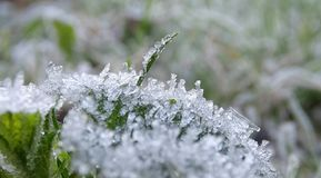 Frost auf Gras Stockbild