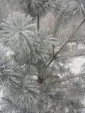 Frost auf Niederlassungen lizenzfreie stockfotos