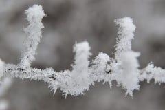 Frost auf Niederlassungen Stockbild