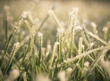 Frost auf Rasen stockbilder