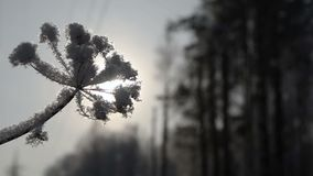 Frost auf trockenem Gras stock footage