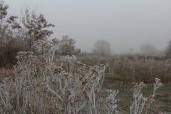 Frost auf trockenen Anlagen lizenzfreie stockbilder