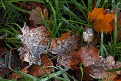 Frost on the leaf and grass. Frost on the autumn leaves and grass Stock Photography
