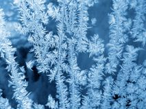 Frost background Stock Photos