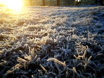 Frost background in November stock images