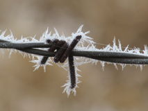 Frost on Barbed Wire Closeup Royalty Free Stock Photo