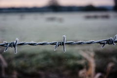 Frost on barbed wire. Stock Images