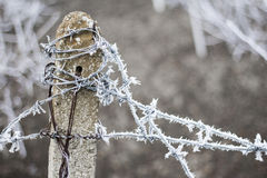 Frost on barbed wire Stock Photos